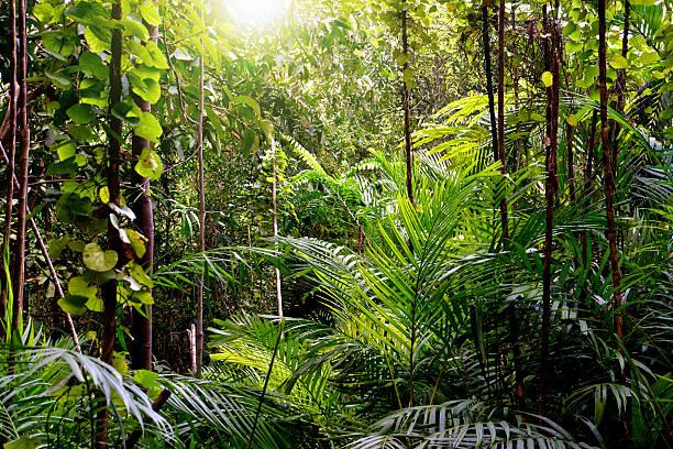 Jungle background, Krabi, Thailand stock photo