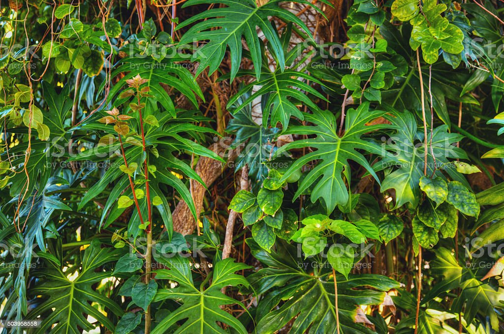 Jungle Background stock photo