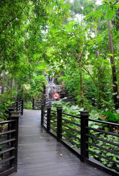 Jungle boardwalk, Kuala Lumpur International Airport (KLIA), Malaysia Kuala Lumpur, Malaysia: Kuala Lumpur International Airport (KLIA), Satellite terminal A - Jungle boardwalk recreational walk path (free access) - real rainforest in the airport, with a waterfall - Sepang, Selangor kuala lumpur airport stock pictures, royalty-free photos & images