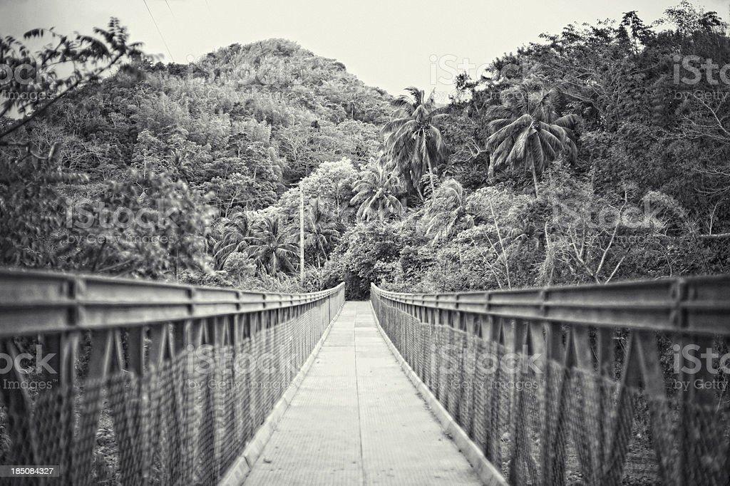 Jungle bridge. stock photo