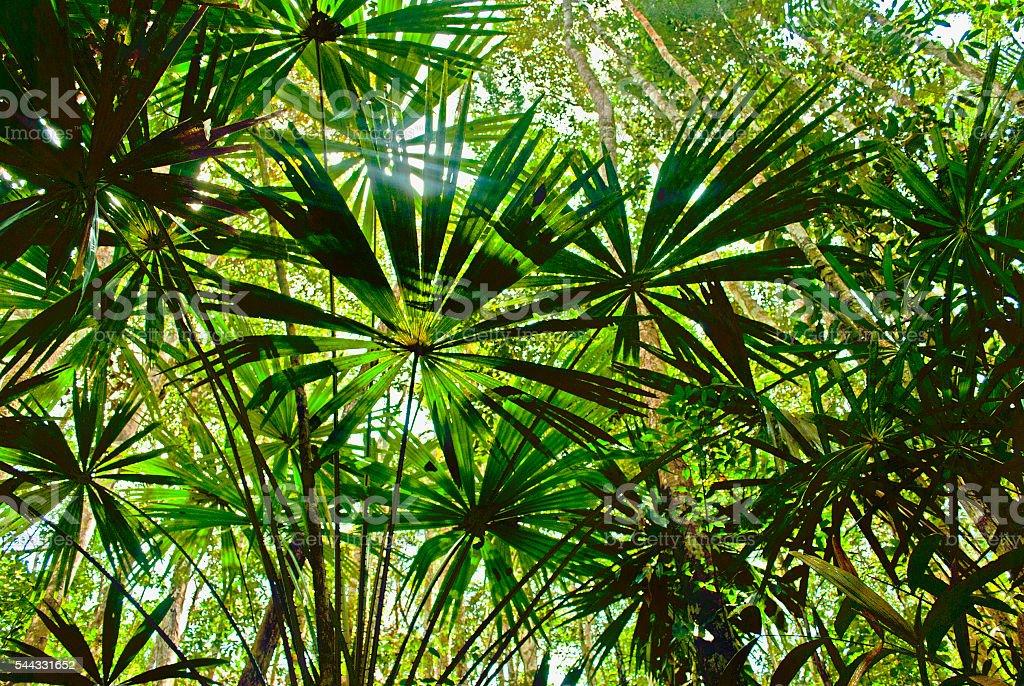 Jungle canopy stock photo