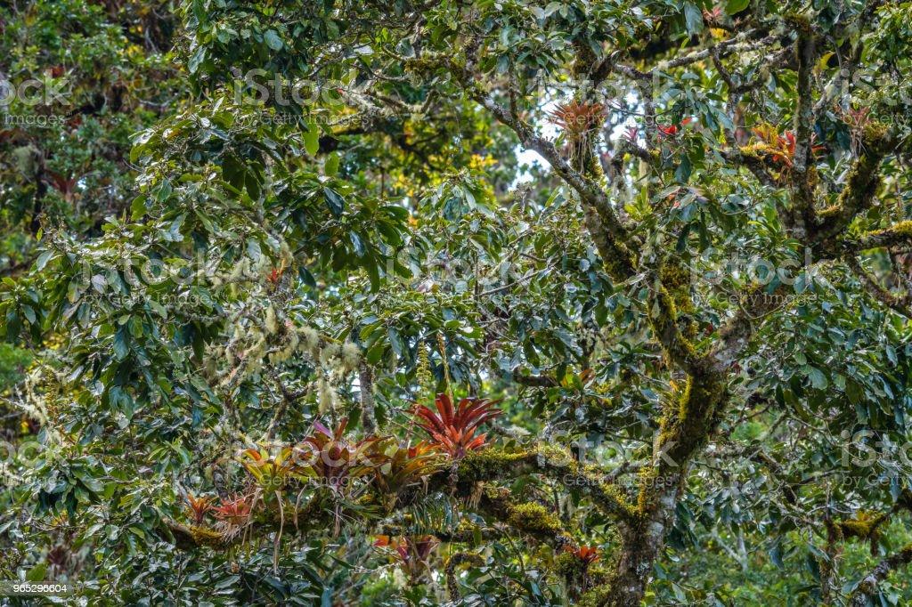 Jungle canopy zbiór zdjęć royalty-free