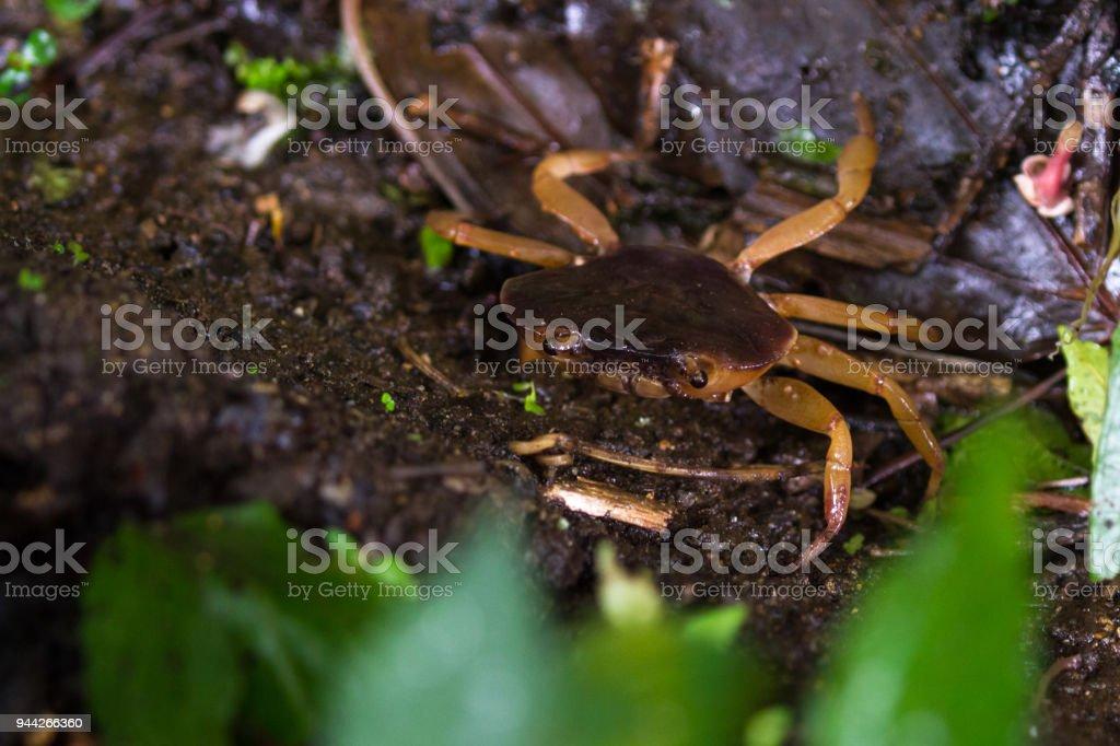 jungle crab stock photo