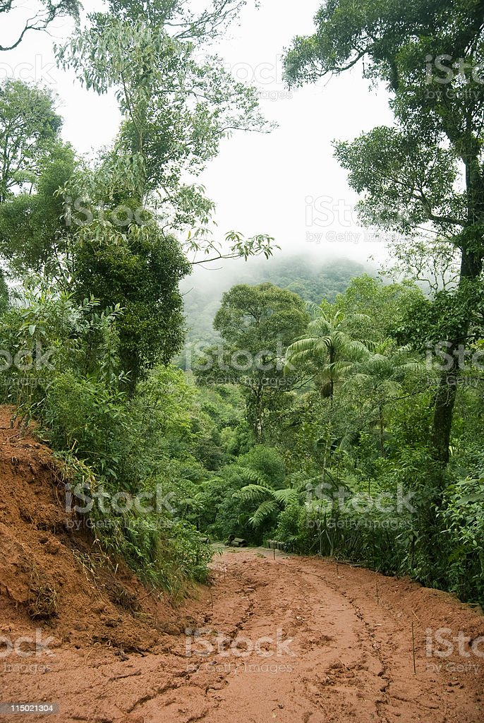 Jungle Deforestation royalty-free stock photo