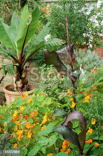 Plants to give an abundant jungle effect in the garden