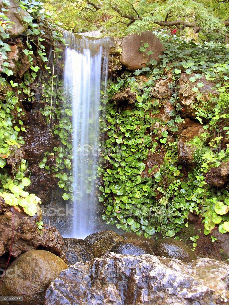 Jungle Garden royalty-free stock photo