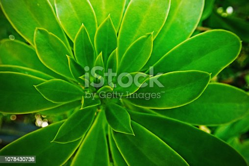 915520716istockphoto Jungle green leaves background 1078430738
