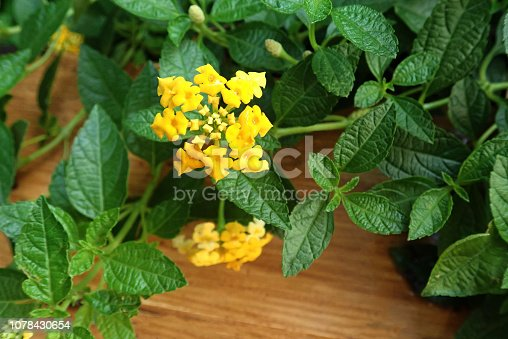 915520716istockphoto Jungle green leaves with flowers background 1078430654