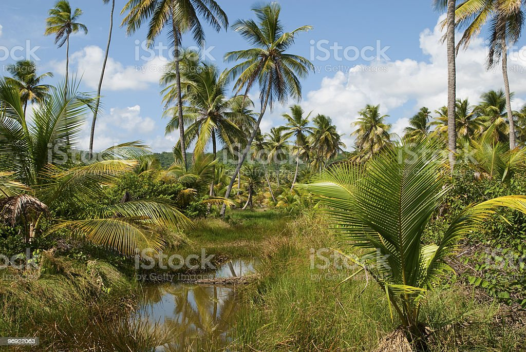 Jungle Green royalty-free stock photo