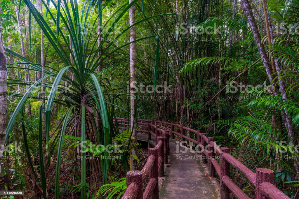 jungle hiking trail - local landmark in Krabi Park, Thailand stock photo