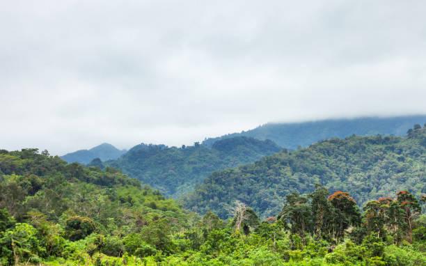 Jungle hills - Jamaica stock photo