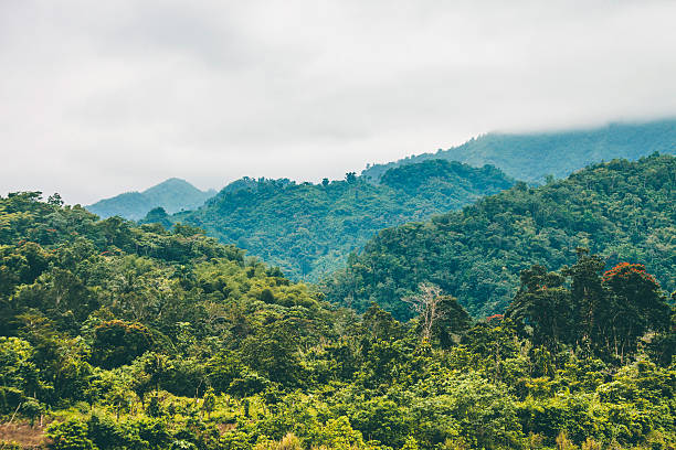jungle hills. - jamaica stock photos and pictures