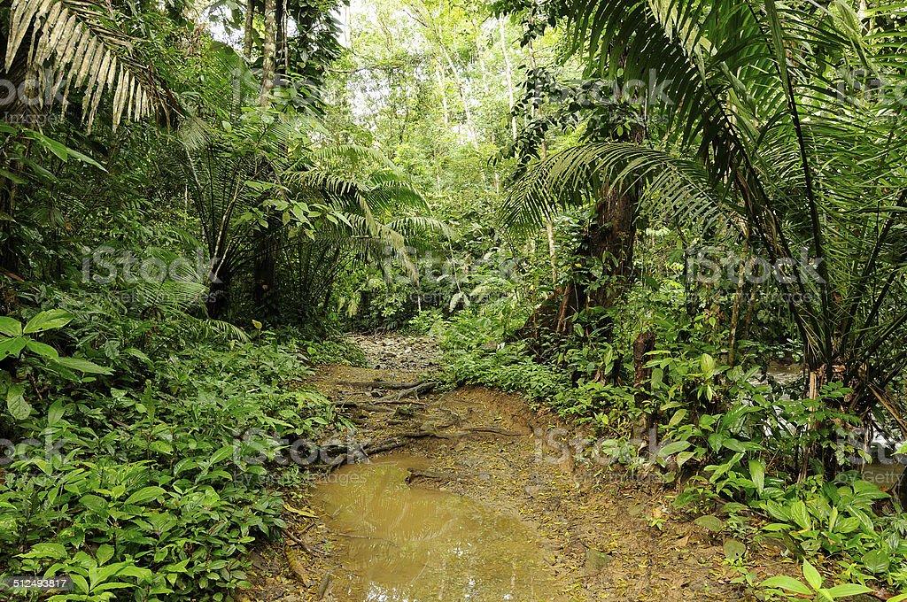 Jungle in Central America stock photo
