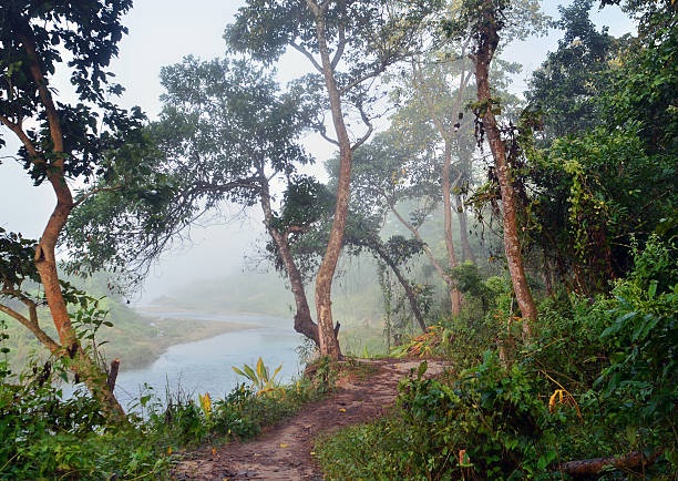Jungle in Royal Chitwan National Park stock photo