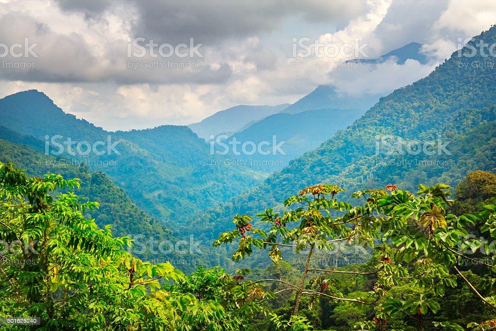 Jungle in Sierra Nevada Mountains in Colombia near Ciudad Perdida stock photo