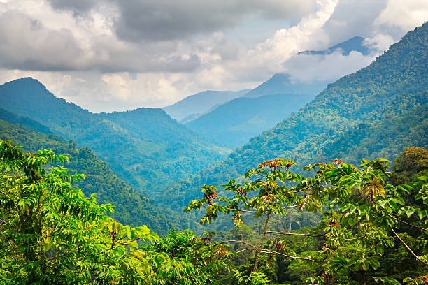 jungle in sierra nevada mountains in colombia near ciudad perdida - colombia stock photos and pictures