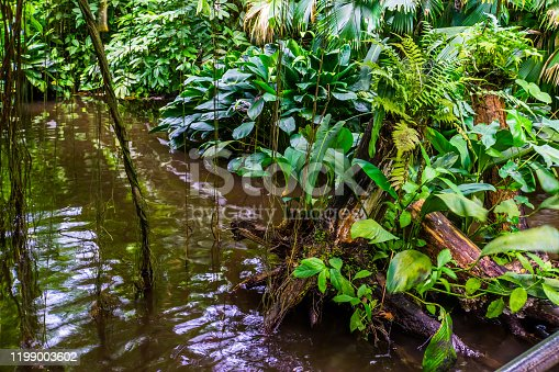 jungle lake with many green tropical plants, exotic garden and nature scenery