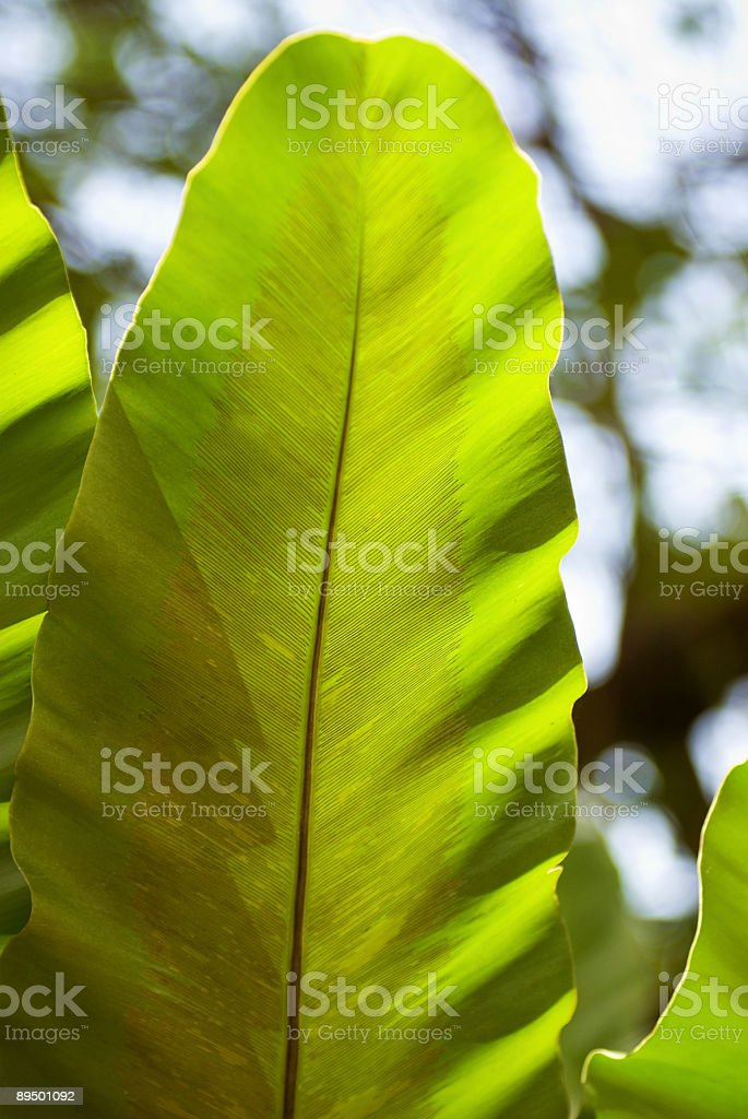 Jungle Leaf 4 royalty free stockfoto