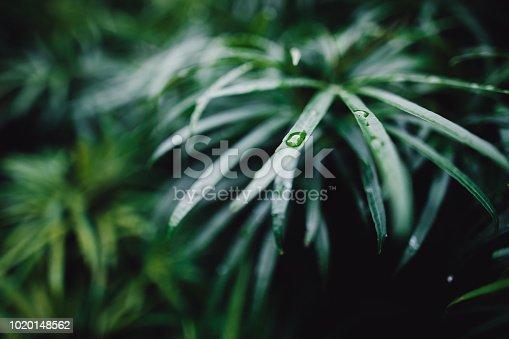 915520716istockphoto Jungle leaves background 1020148562