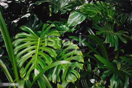 915520716istockphoto Jungle leaves background 1020148640