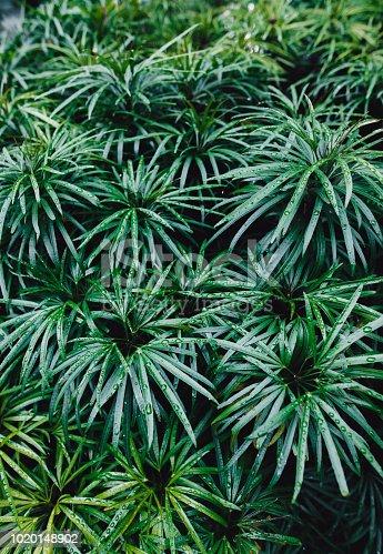 915520716istockphoto Jungle leaves background 1020148902