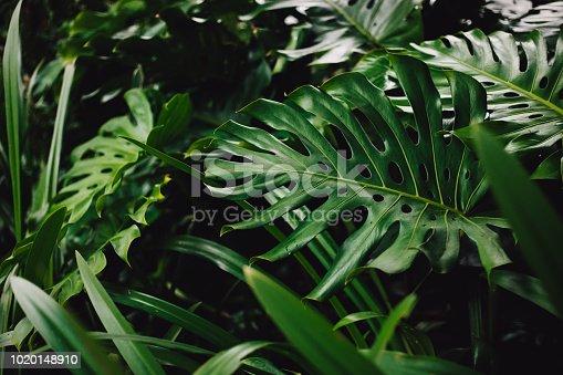 915520716istockphoto Jungle leaves background 1020148910