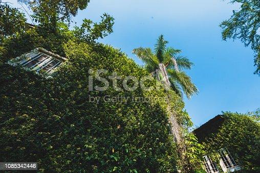 915520716istockphoto Jungle leaves background 1085342446