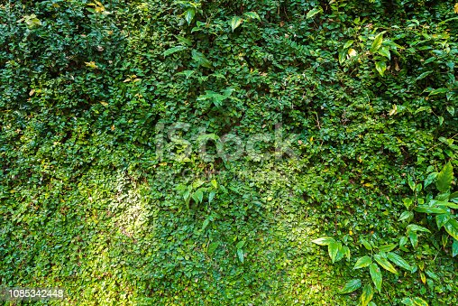 915520716istockphoto Jungle leaves background 1085342448