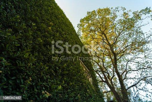 915520716istockphoto Jungle leaves background 1085342452
