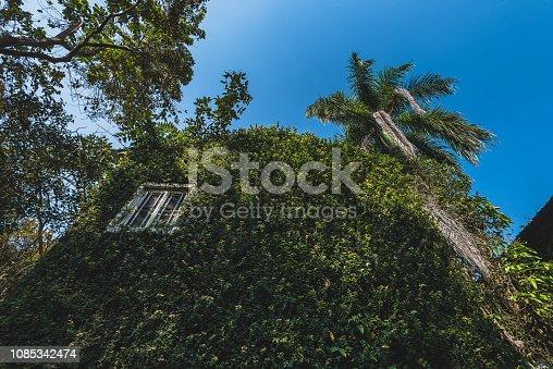 915520716istockphoto Jungle leaves background 1085342474