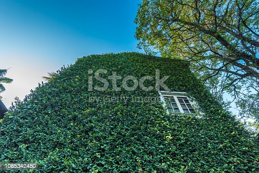 915520716istockphoto Jungle leaves background 1085342480