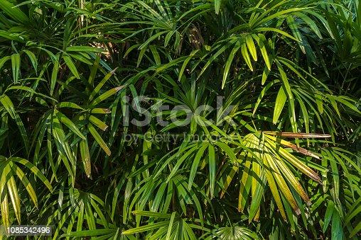915520716istockphoto Jungle leaves background 1085342496