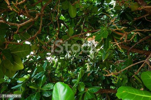 915520716istockphoto Jungle leaves background 1148622915