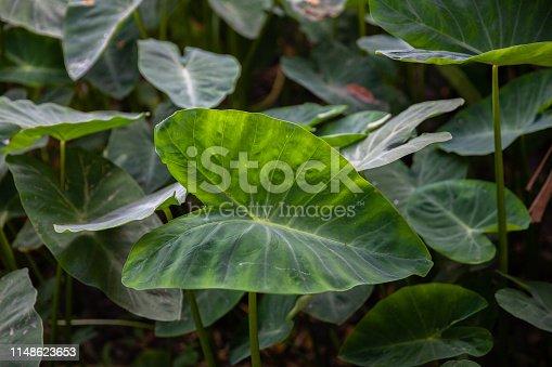 915520716istockphoto Jungle leaves background 1148623653