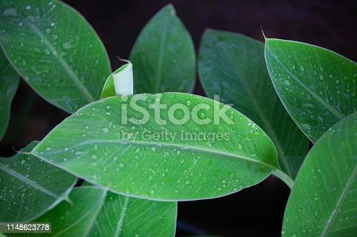 915520716istockphoto Jungle leaves background 1148623778