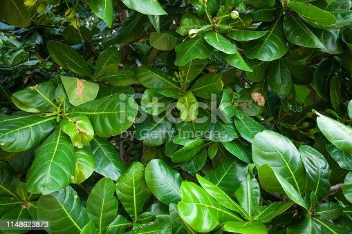 915520716istockphoto Jungle leaves background 1148623873