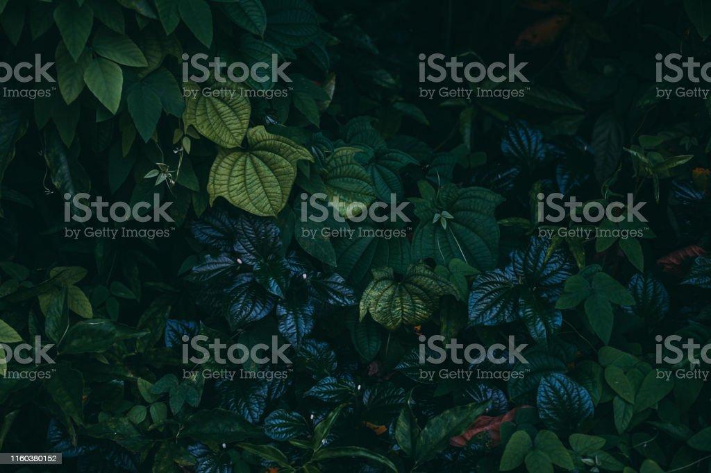 정글 잎 배경 - 로열티 프리 0명 스톡 사진