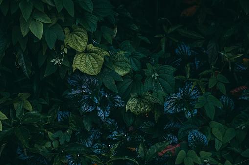 정글 잎 배경 0명에 대한 스톡 사진 및 기타 이미지