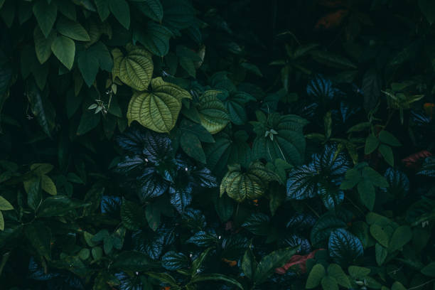 Jungle leaves background Jungle leaves background lush foliage stock pictures, royalty-free photos & images