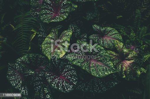 915520716istockphoto Jungle leaves background 1169926696