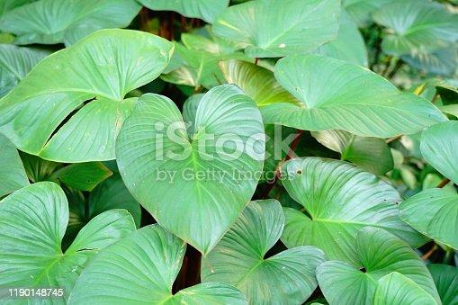 915520716 istock photo Jungle leaves background 1190148745