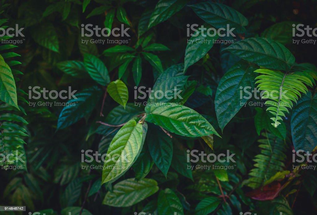 Dschungel verlässt Hintergrund – Foto