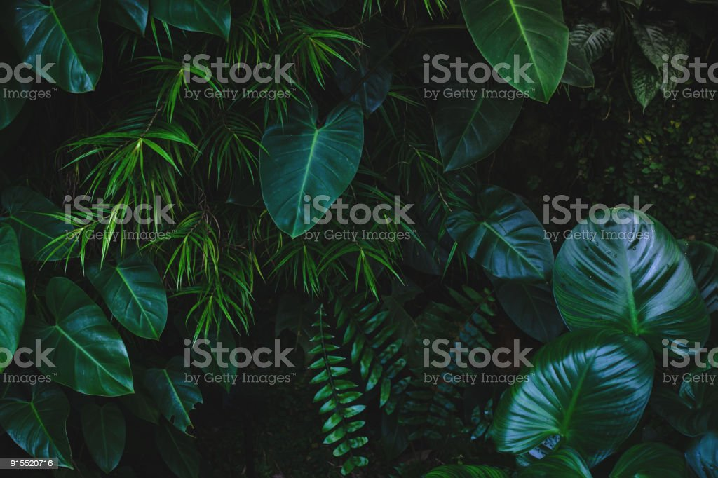 Jungle leaves background royalty-free stock photo