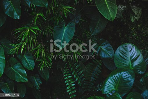 istock Jungle leaves background 915520716