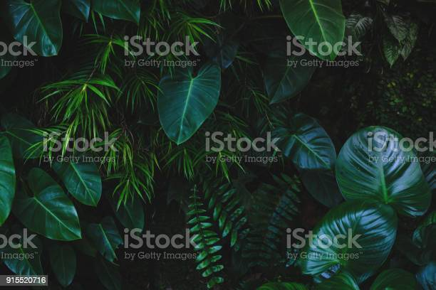 Jungle leaves background picture id915520716?b=1&k=6&m=915520716&s=612x612&h=5uxe7ldlgdovadlgc8hwxxjns6vwuegozalk 9hzwuc=