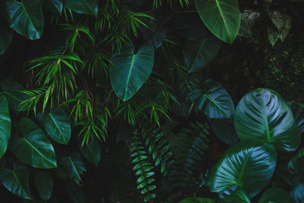 Jungle leaves background picture id915520716?b=1&k=6&m=915520716&s=612x612&w=0&h=bhdgzq1cfl5nmygdqecb2n hkuoznuxhwr1bgbb szc=