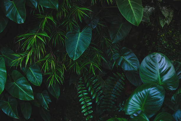 jungle leaves background - green color stock pictures, royalty-free photos & images