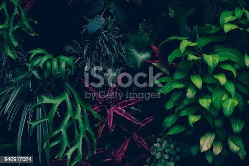 915520716istockphoto Jungle leaves background 946917024