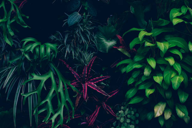 jungle leaves background - singapore nature stock photos and pictures