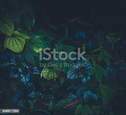 915520716istockphoto Jungle leaves background 946917094
